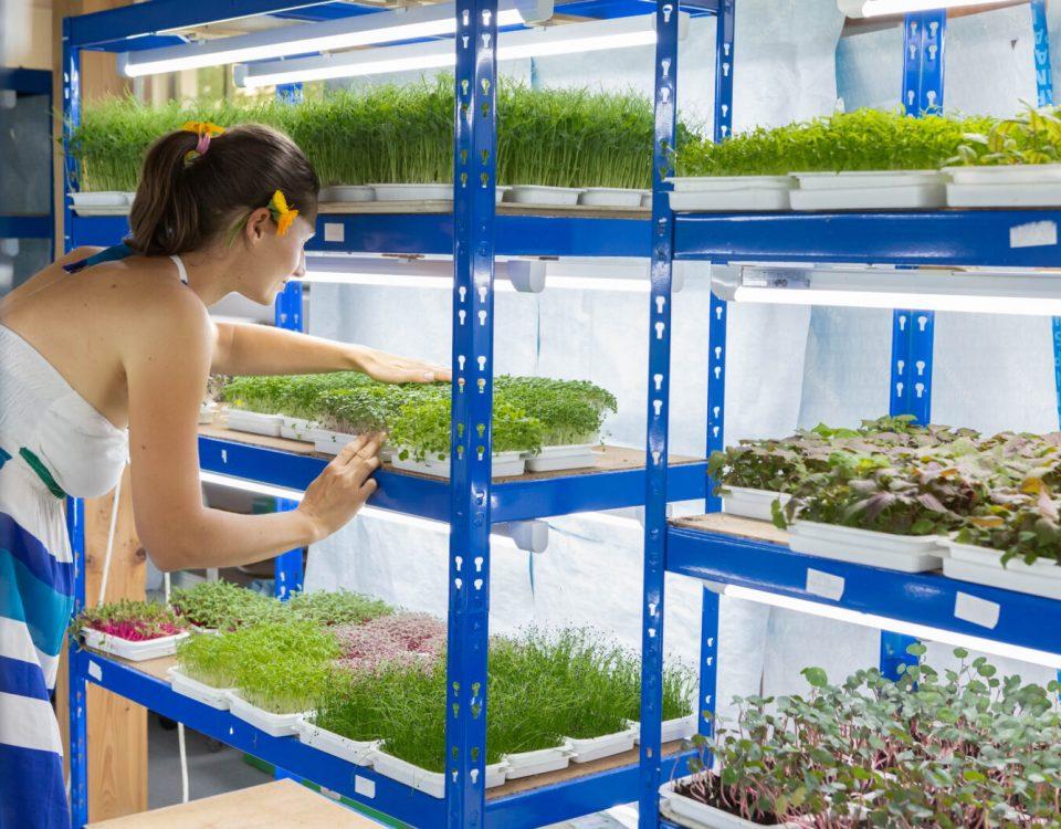 Microgreen adalah salah satu hobi yang cocok saat stay at home